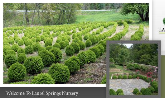 Wholesale Topiary