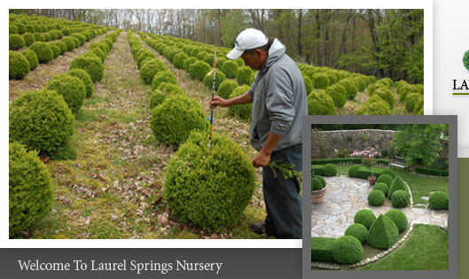 Laurel Springs Nursery