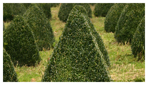 Wholesale Topiary Growers - Wholesale Topiary